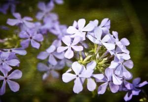Spring_2619